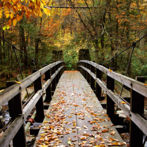 Bridging Autumn