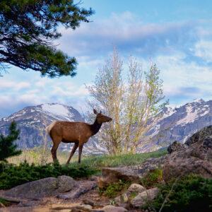 Elk's Paradise