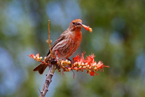 Finch Attitude