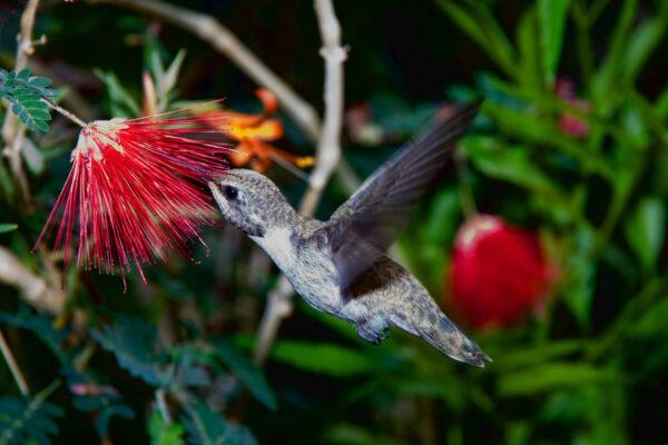 Hummingbird Snack