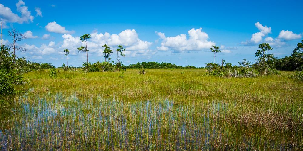 Departure: Everglades