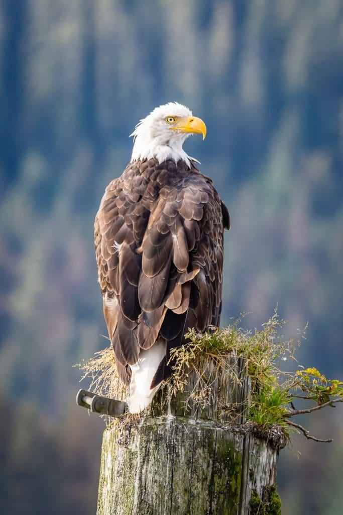 Eagle Post